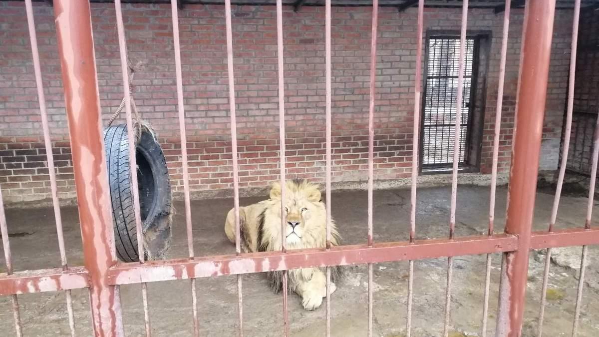 У приватному звіринці на Харківщині голодують тварини