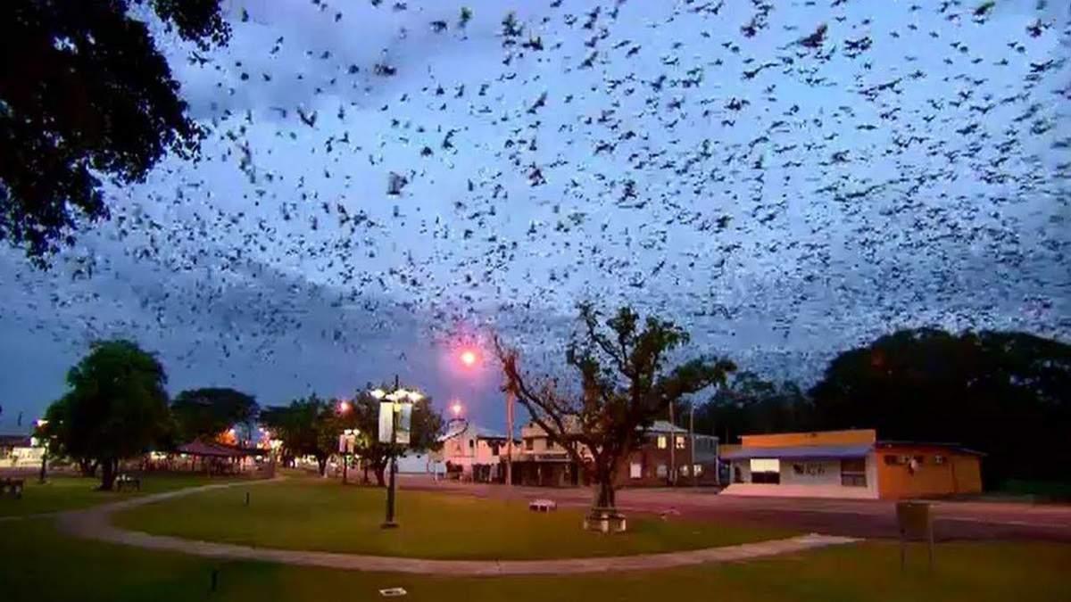 Торнадо з кажанів вирує в Австралії