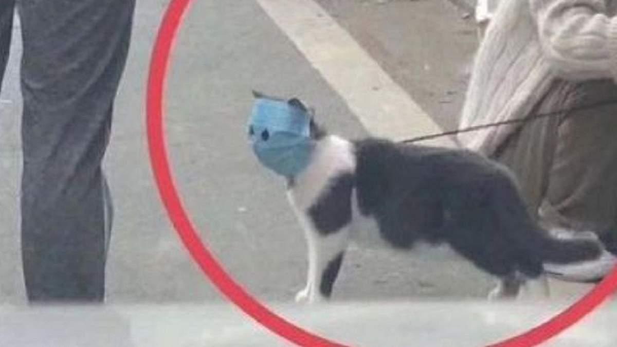 Хозяева натянули на кота маску, чтобы защитить от коронавируса: животное стало мемом