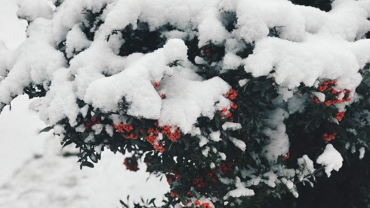 Погода 15 лютого 2020 в Україні – яку погоду обіцяє синоптик