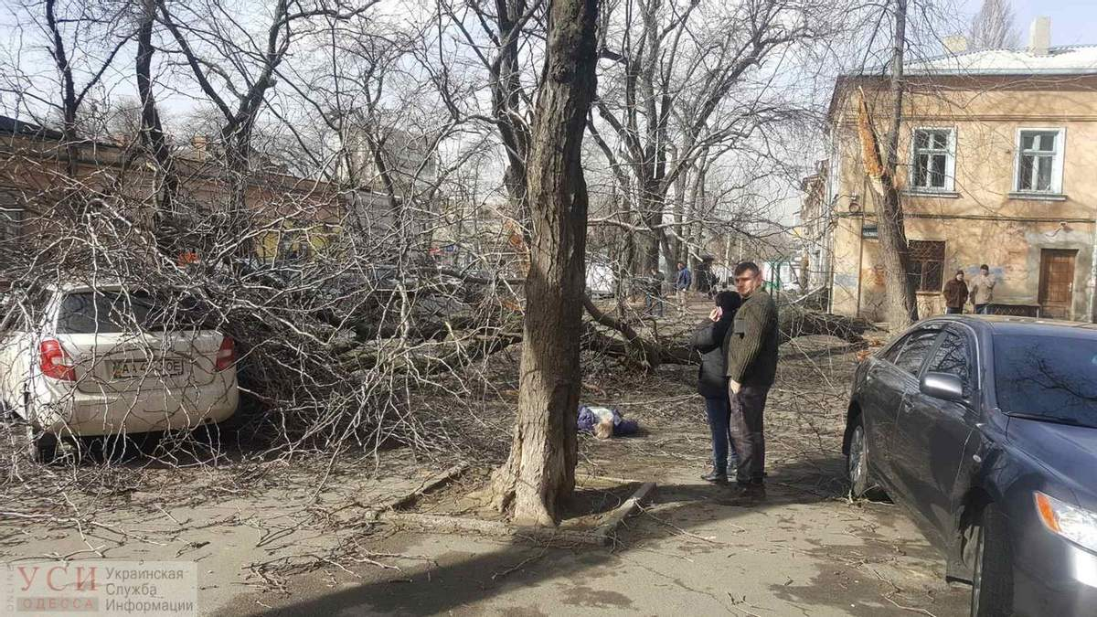 В Одессе дерево упало на женщину – она погибла: фото 24.02.2020