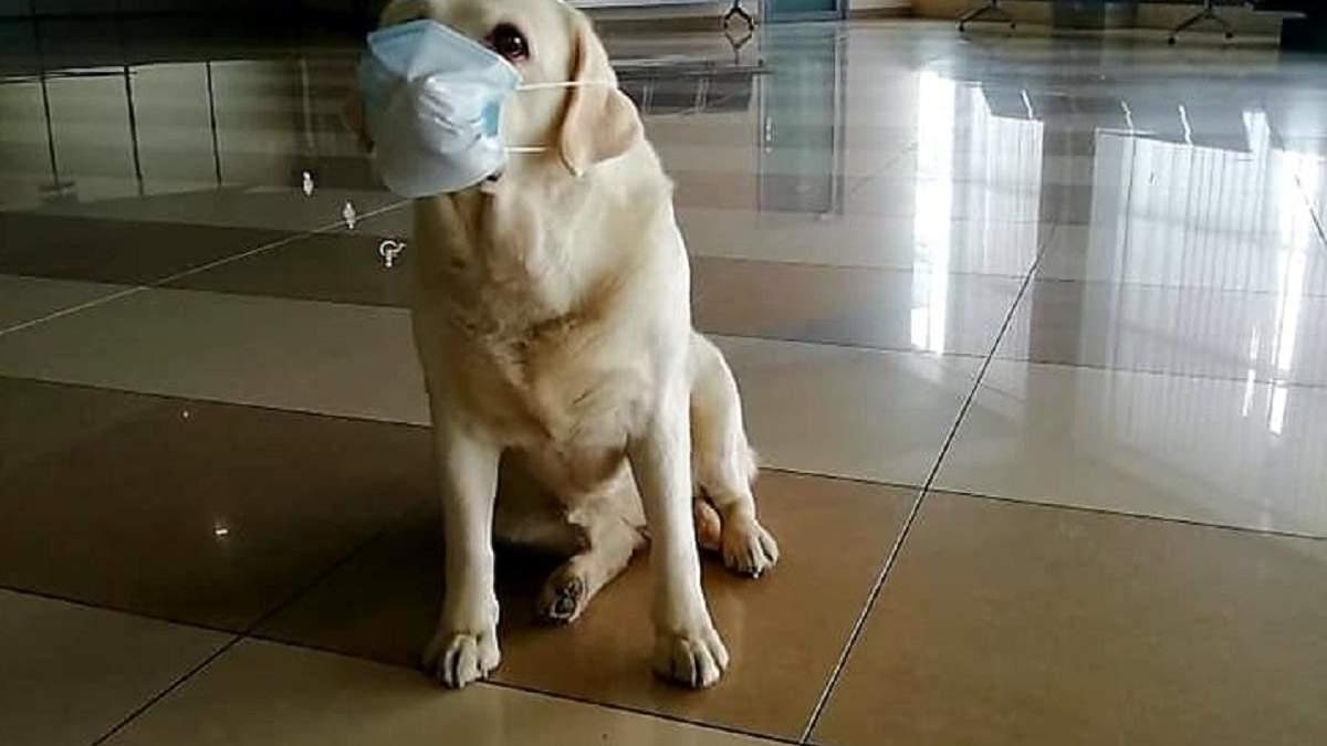 Прикордонних песиків одягли у захисні маски через коронавірус: кумедні фото