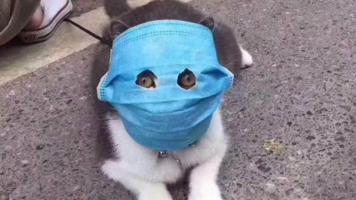 Чи можуть домашні тварини переносити коронавірус