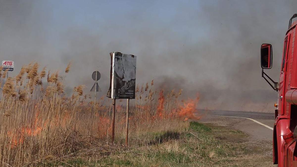 Тварини у небезпеці: на Одещині горить національний природний парк – фото