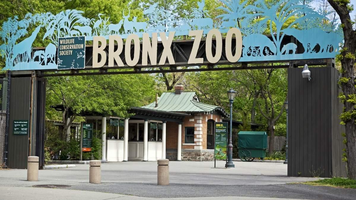 У тигра зі зоопарку Нью-Йорка виявили коронавірус