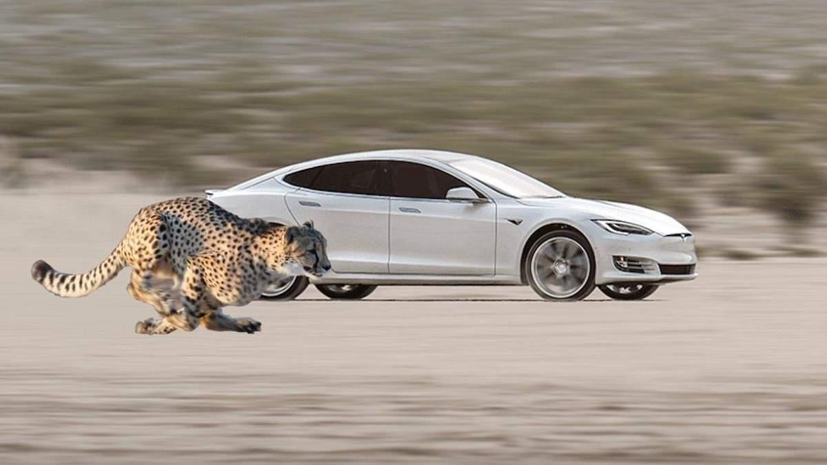 "Электрокары Tesla получат режим ""Cheetah stance"""