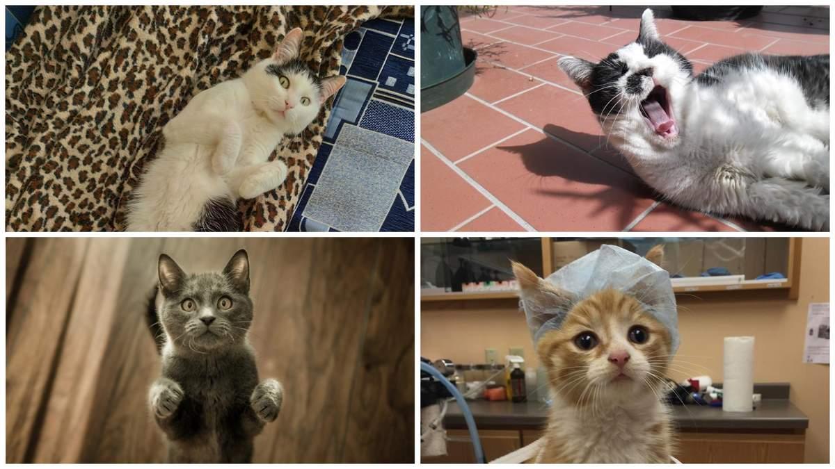 Коти і COVID-19: чи повинні домашні тварини бути на карантині