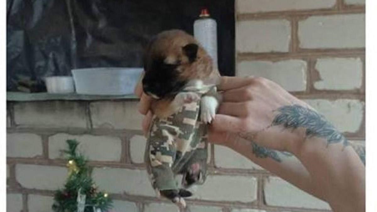 Поповнення у лавах ЗСУ – пес Спартанець готовий