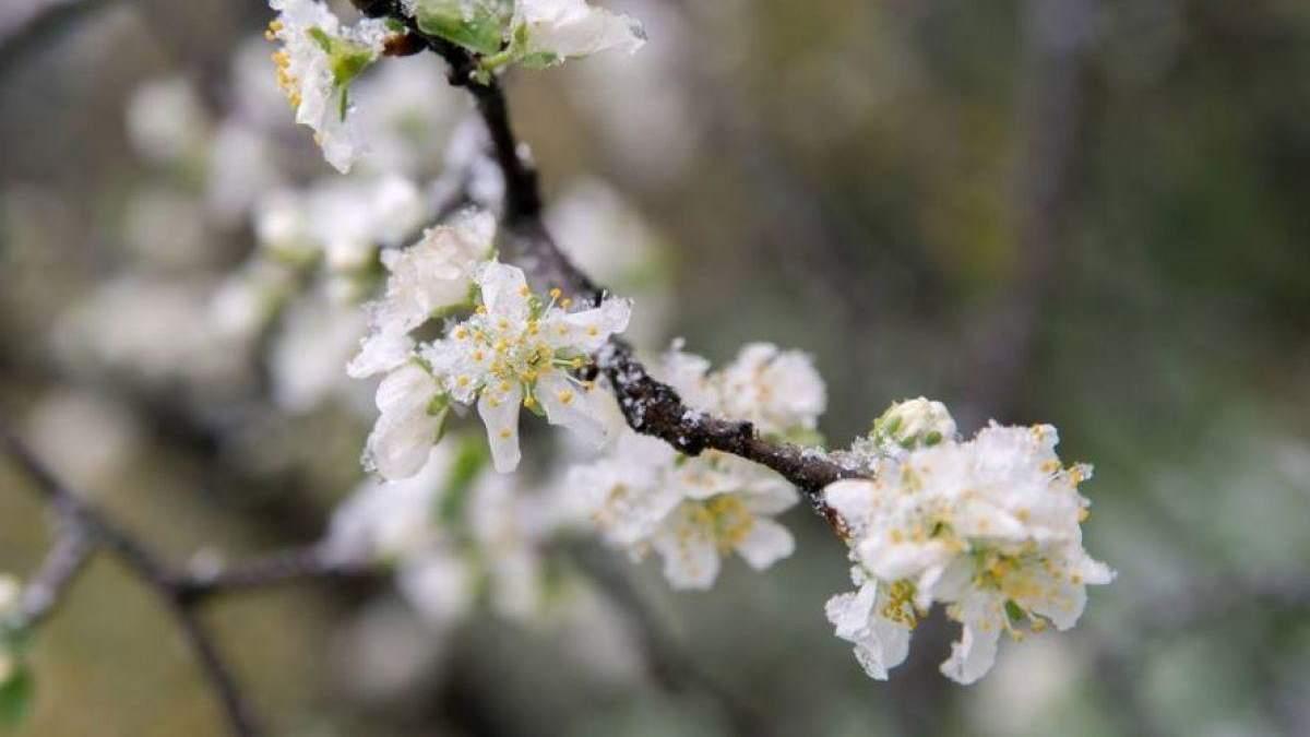 Погода 14 апреля 2020 Украина – что обещают синоптики