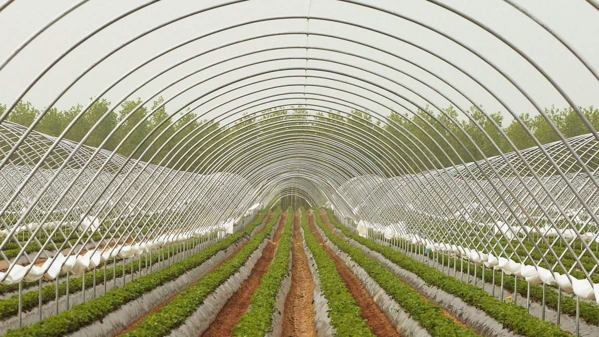 Миллион с гектара: как заработать в малом агробизнесе