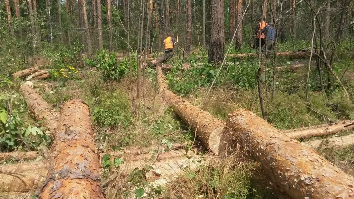 Київ втрачає легені: в столиці вирубано 1 мільйон дерев