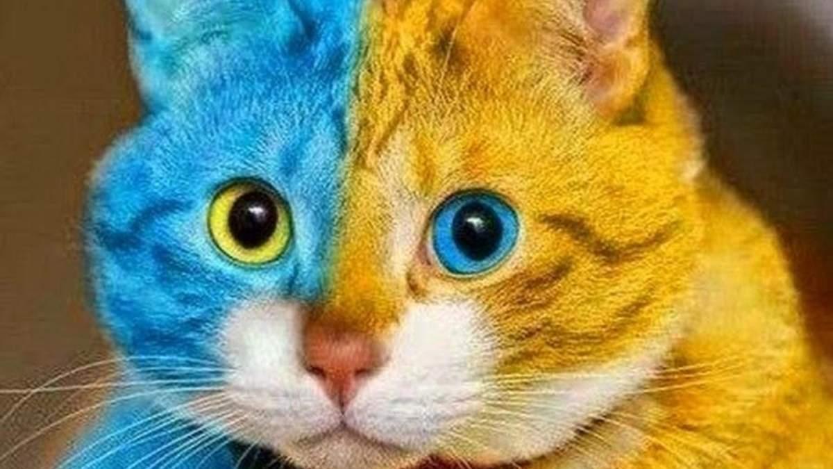 Не купуйте російське! Беріть приклад з котів