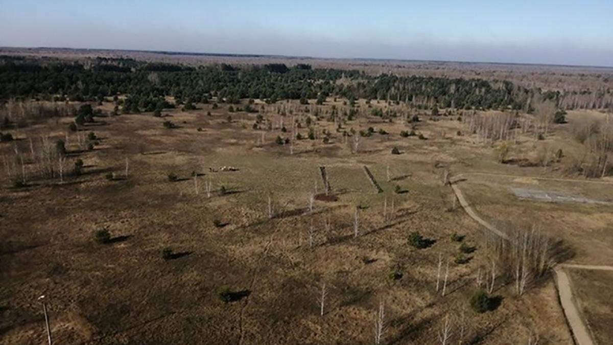 У Чорнобильській зоні горять торфовища