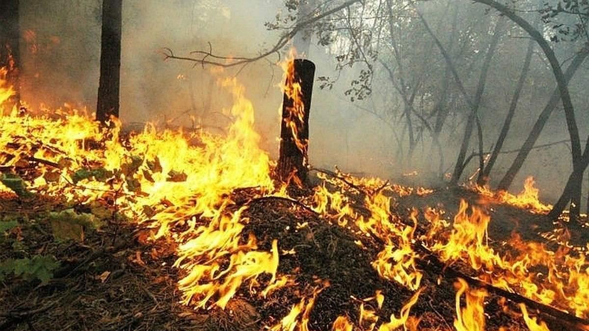 Пожары в Сибири 2020: из-за аномальной жары снова загорелась тайга