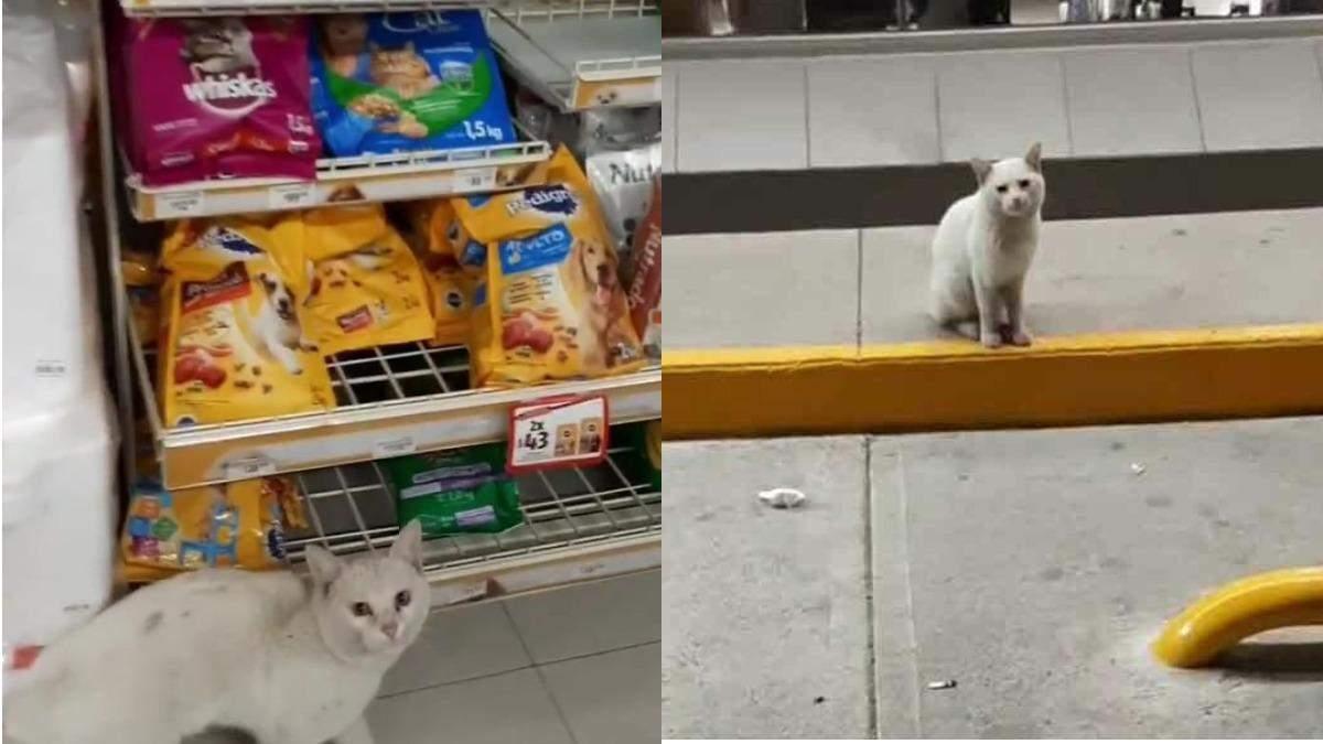Погладив – купи їжу: у Мексиці бездомний кіт проводив людей до полиці з кормом