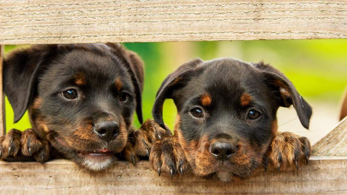 Бренди, які не тестують косметику на тваринах: фото