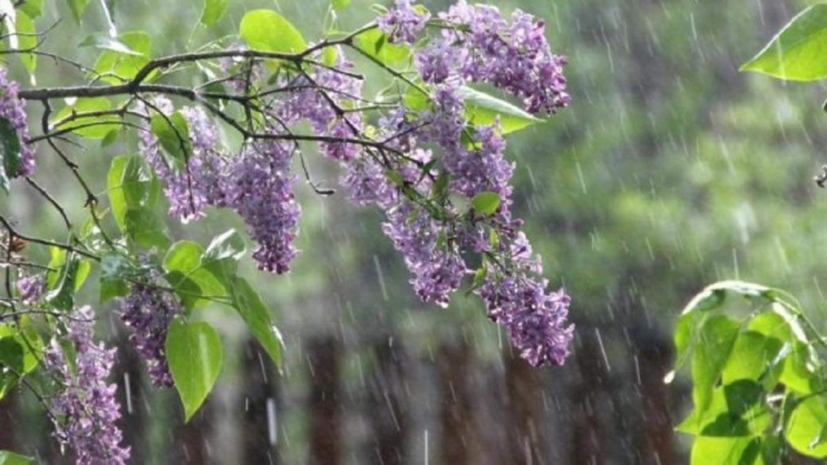 Погода 14 травня 2020 в Україні – яку погоду обіцяє синоптик