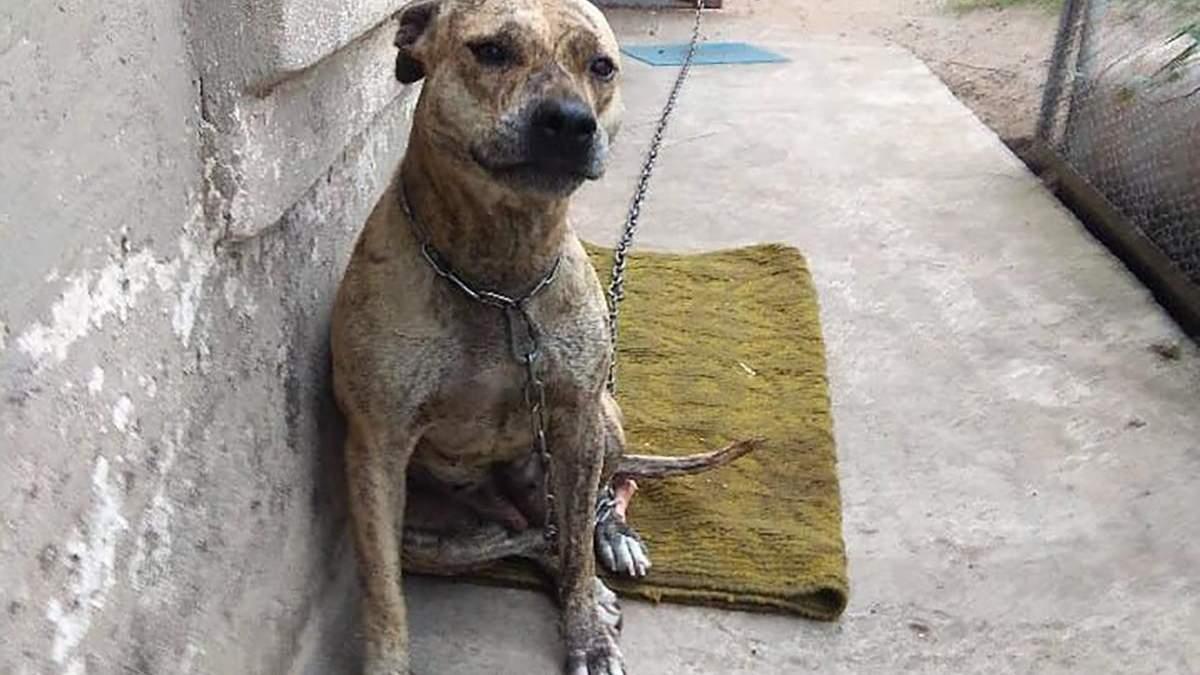 Скандал з продажем собаки на аукціоні: чому Мін'юст  відбирає тварин у їхніх власників