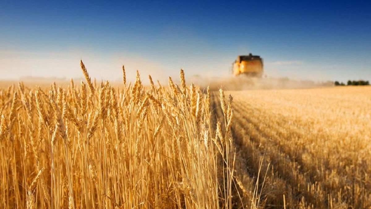 Україна збере хороший урожай