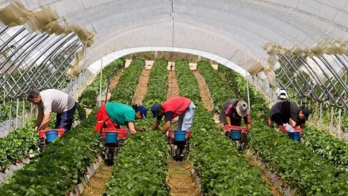 Сезонная работа в Чехии 2020: без украинцев проблемы у фермеров