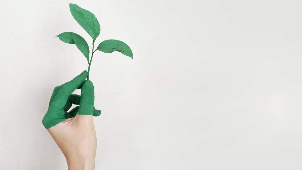 Як косметика шкодить навколишньому середовищу: екологічні альтернативи