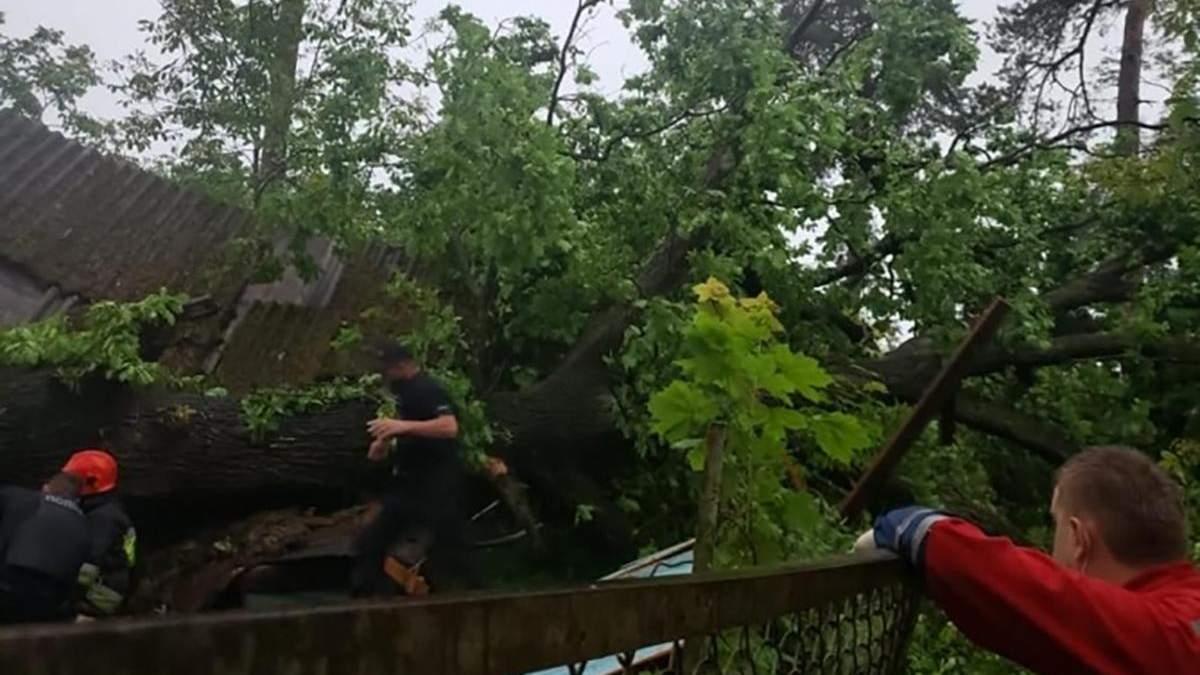 Дерево убило женщину в Брюховичах 11 июня 2020: фото
