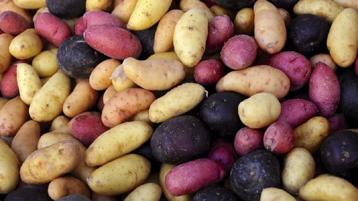 В Україну завозили неякісну картоплю - 24 Канал