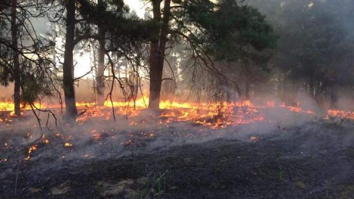 На Луганщині горіла трава: рятувальники вилучили десятки вибухонебезпечних предметів