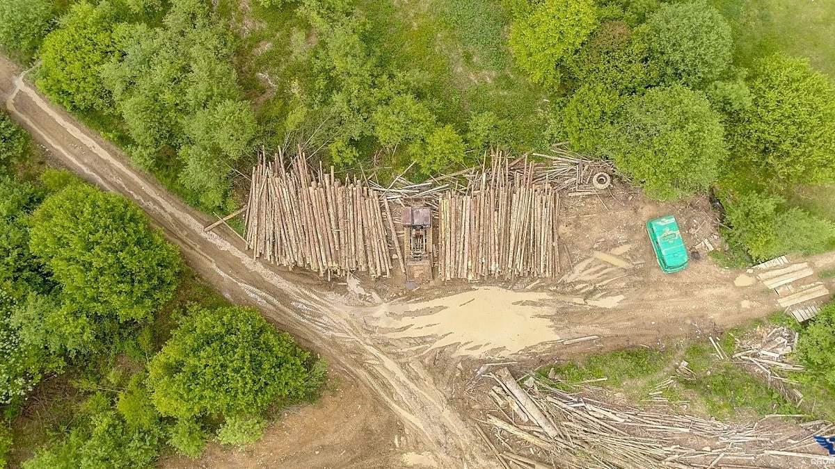 """Якими є наслідки масової вирубки лісів: фото """"лисих"""" Карпат"""