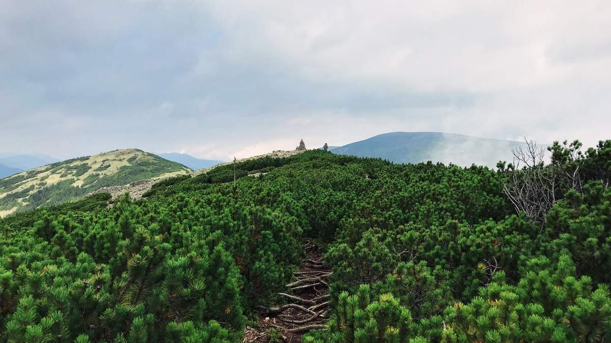 В Украине инвентаризируют леса
