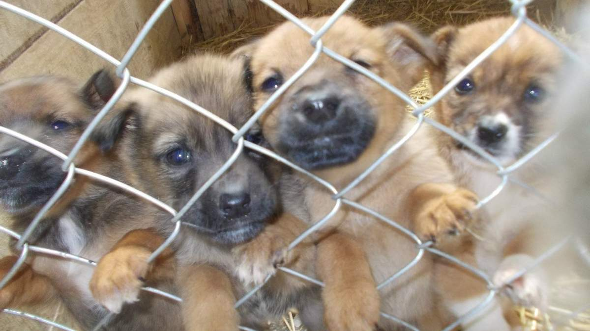Конфискованных животных больше не будут продавать с аукционов