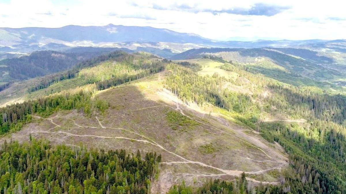 Прокуратура Франковщины открыла дело о вырубке леса: это могло привести к наводнению на западе Украины