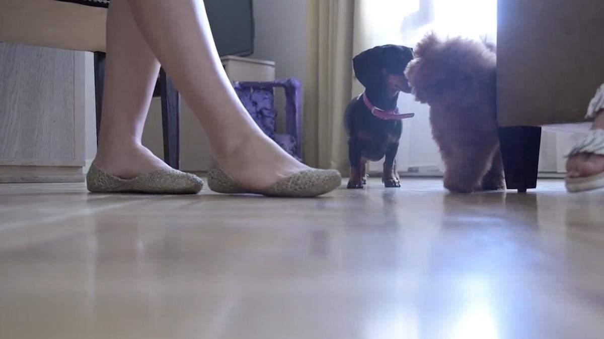 Кулеба та команда МЗС прийшли на роботу з собаками: відео
