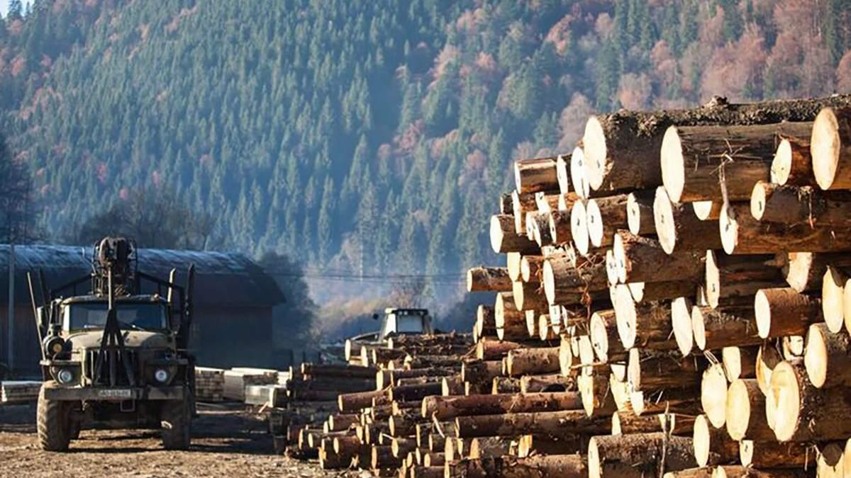 IKEA проведет масштабное расследование источников древесины