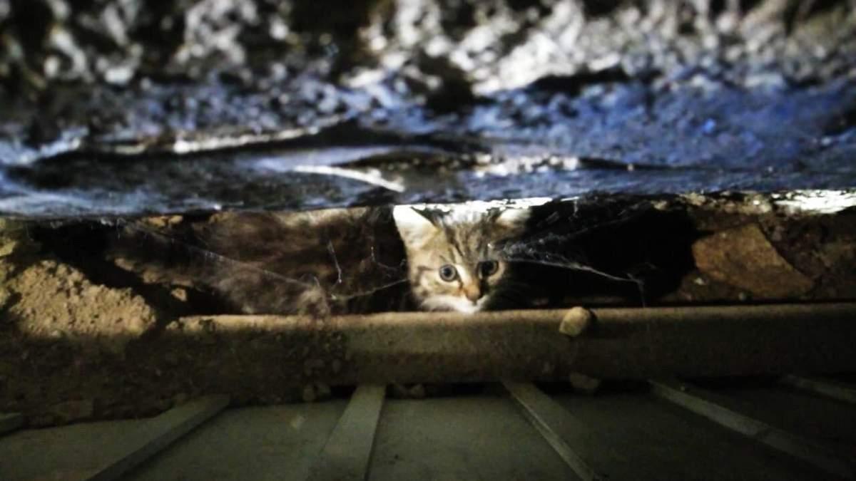 Кошеня застрягло у моторному відсіку маршрутки