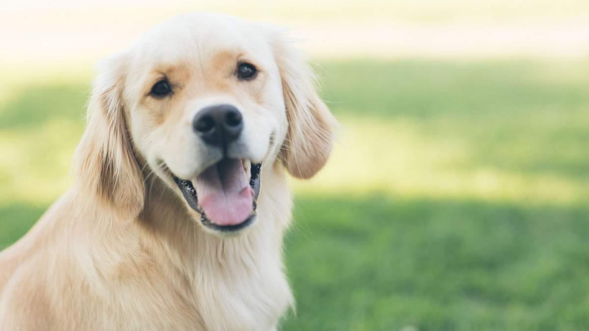 Як перевести вік собак на людський