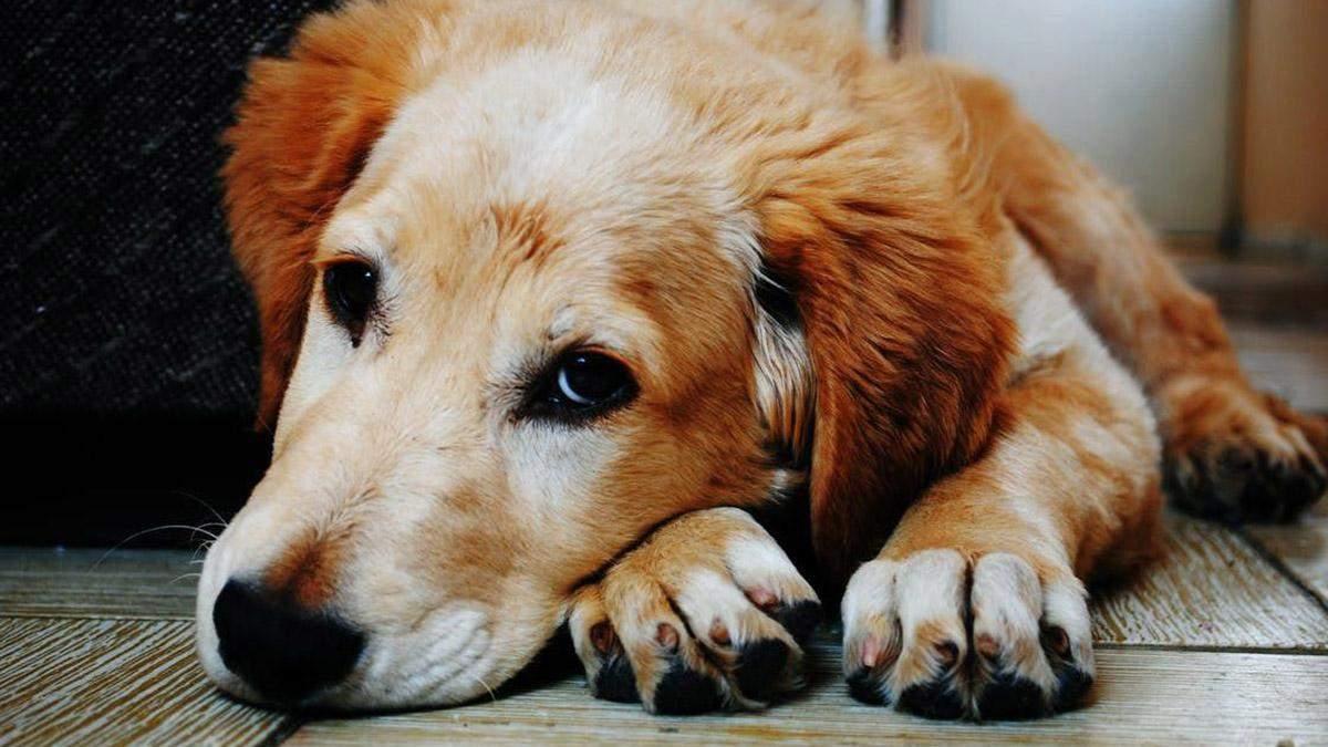 Собака вистрибнув з вікна через смерть господарки