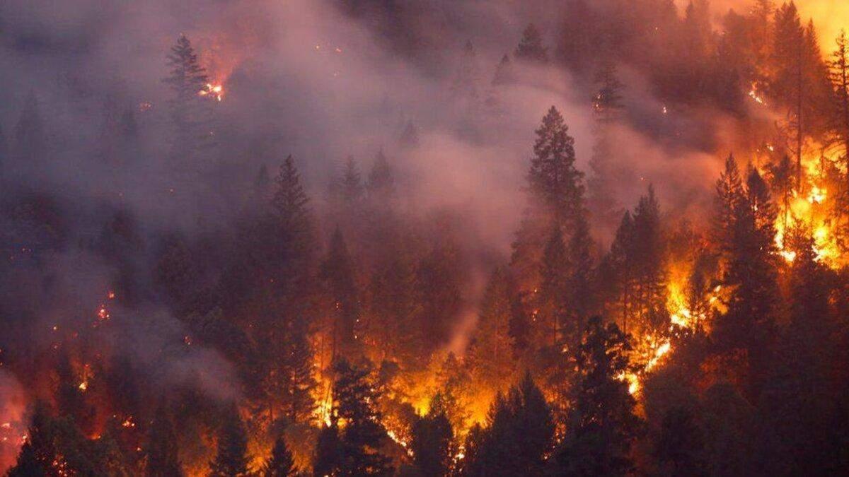 Пожар в Сибири: российская власть отказывается тушить возгорания