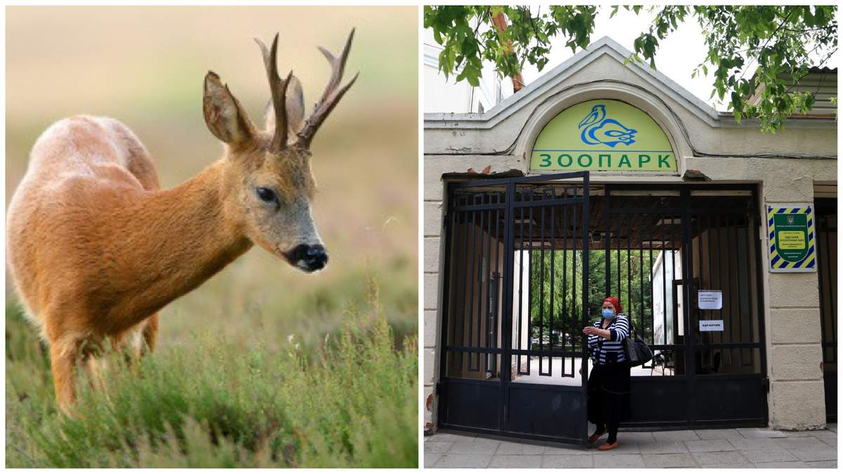 В зоопарку Одеси померло дитинча козулі через дії відвідувачки