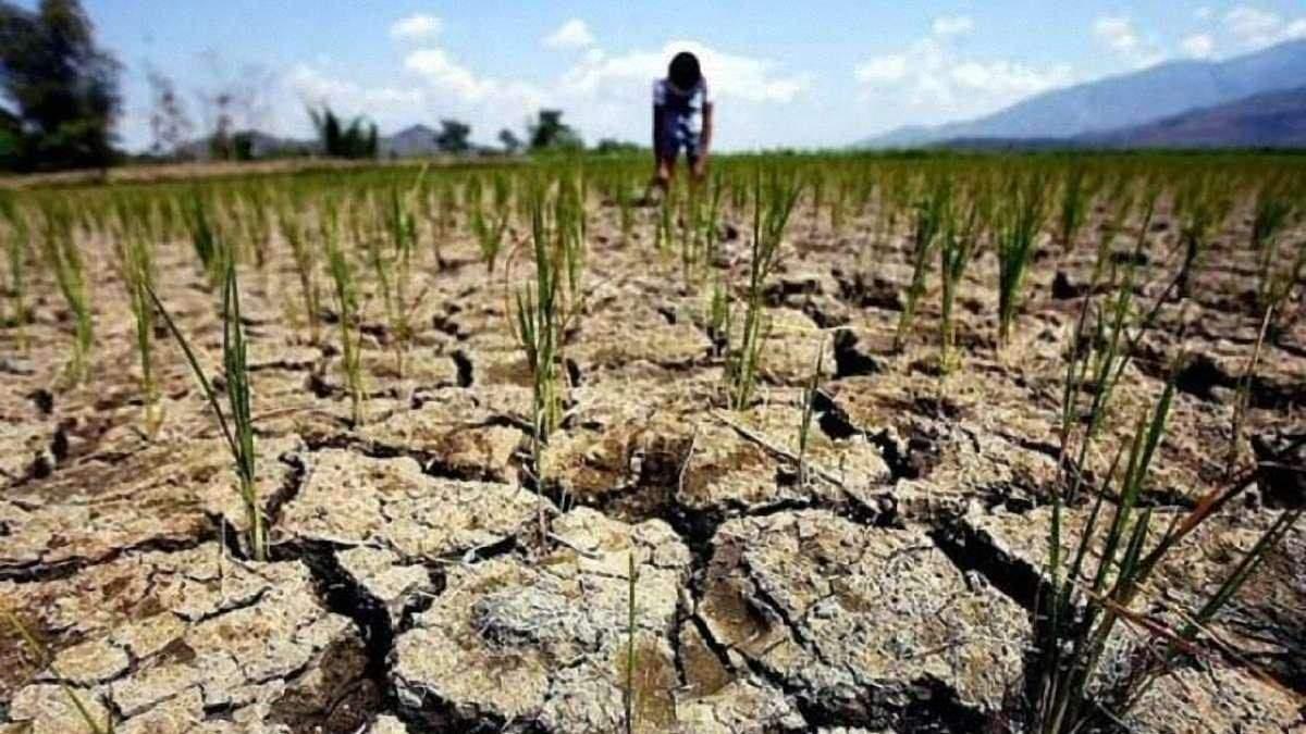 Засуху в Одесской области признали чрезвычайной ситуацией госуровня