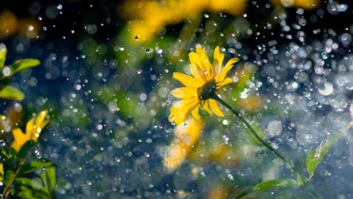Погода 14 липня 2020 в Україні: яку погоду обіцяє синоптик