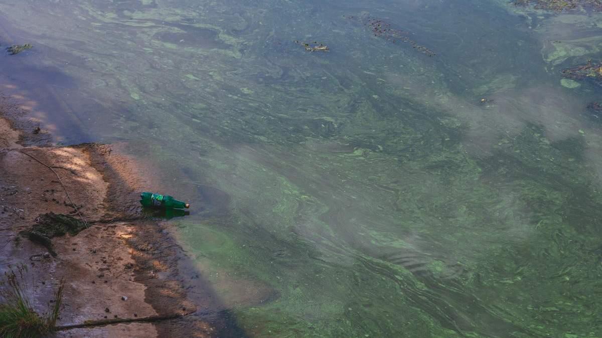 Цвітіння річок в Україні 2020: чому відбувається, чим небезпечно, фото