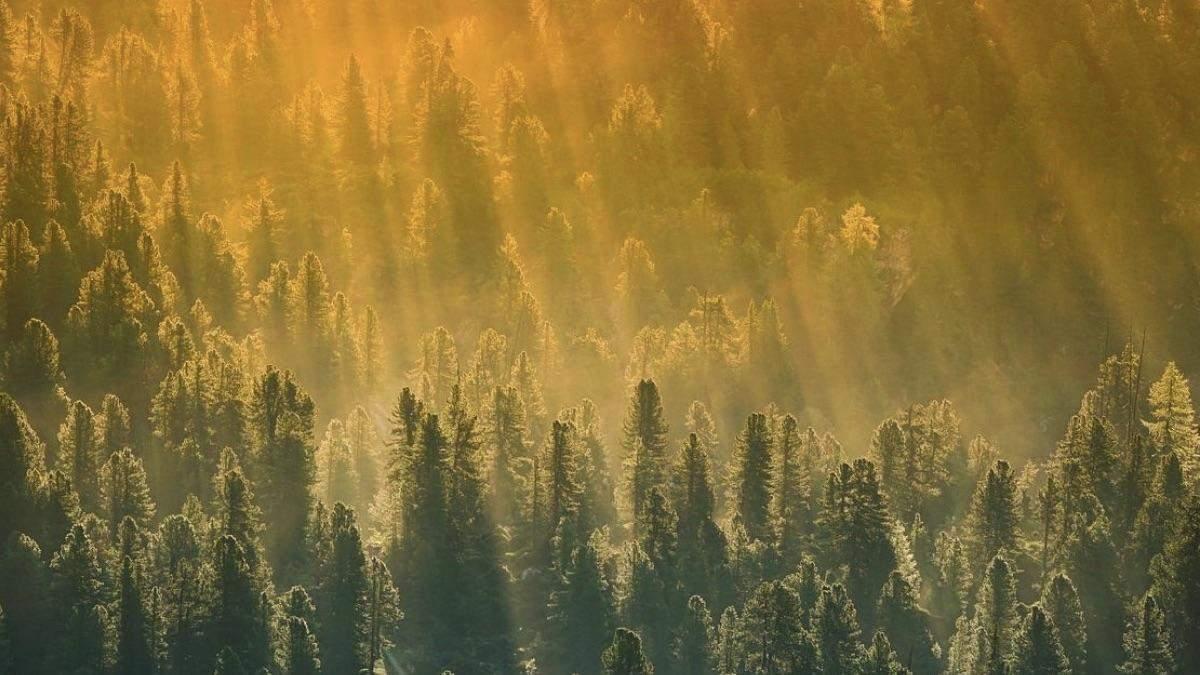 Погода 23 липня 2020 в Україні: яку погоду обіцяє синоптик