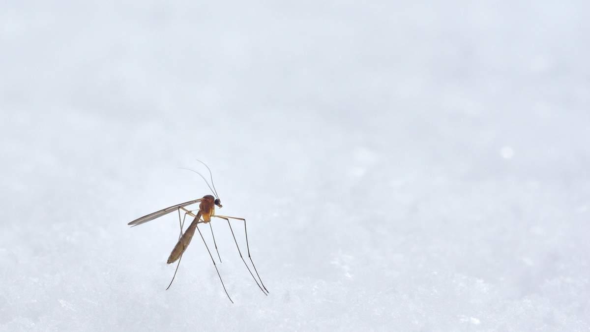 В Одесской области зафиксирован смертельный случай от малярии