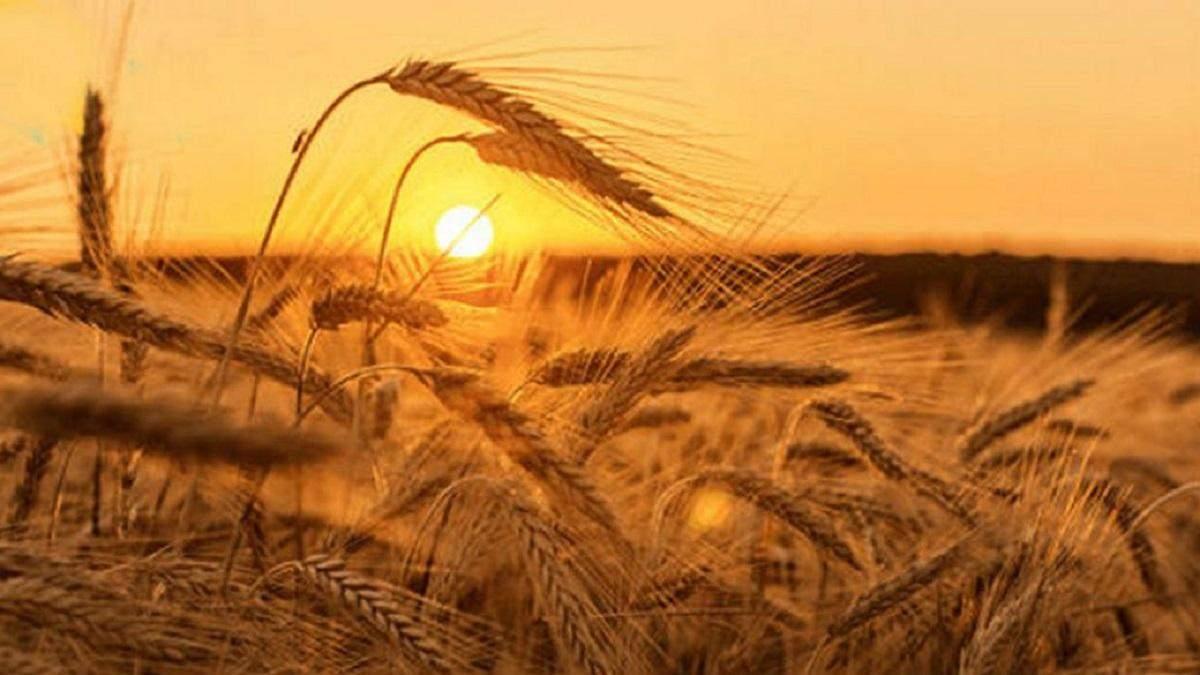Який буде серпень 2020 в Україні: прогноз погоди синоптиків