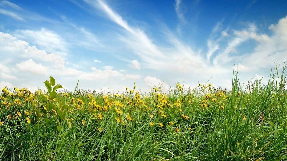 Погода 28 июля 2020 Украина: какую погоду обещает синоптик