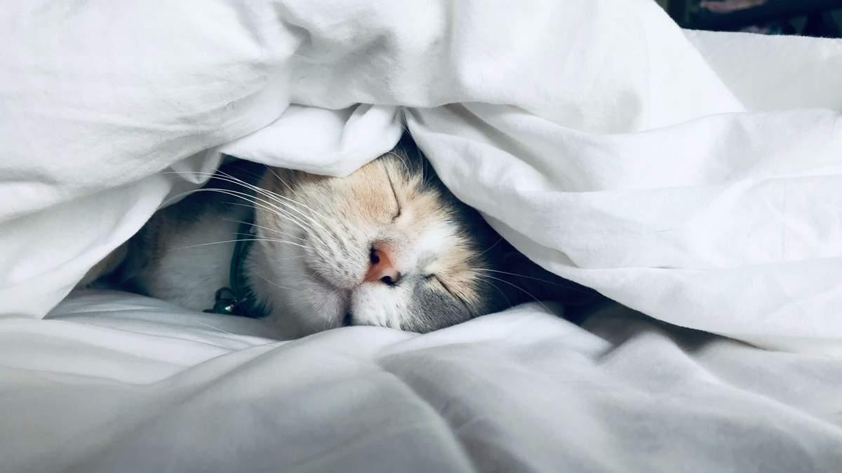 Спи або помреш: які наслідки несе постійне недосипання?