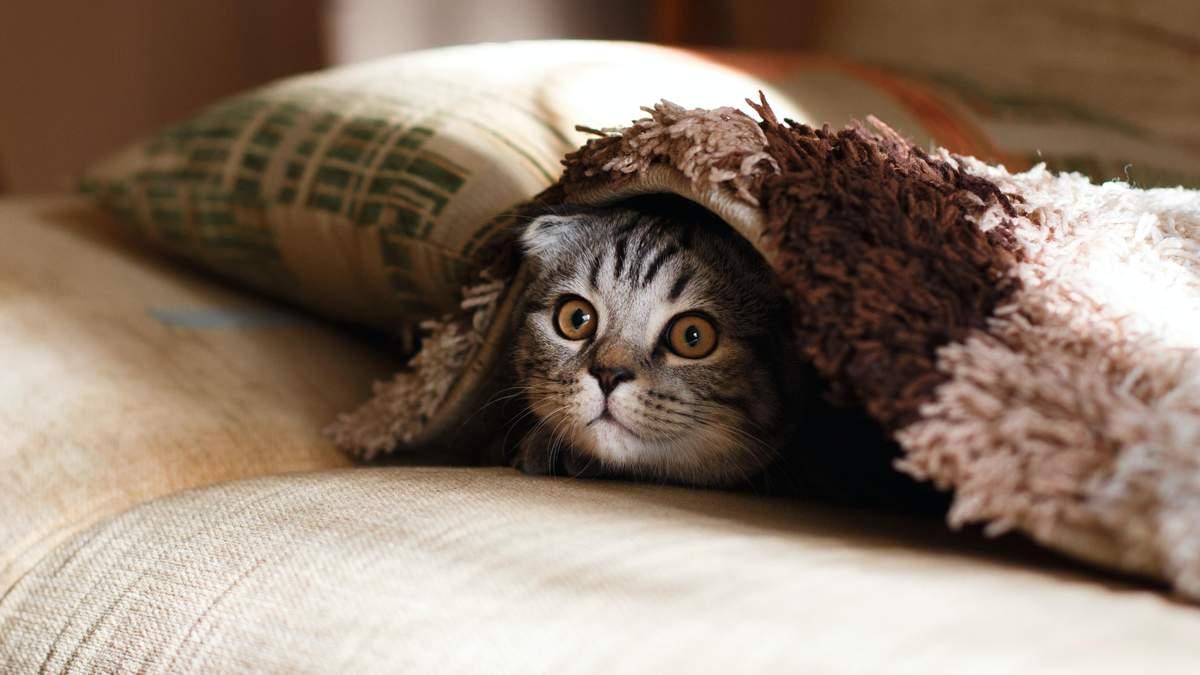 В Британии обнаружили первый случай заражения COVID-19 у домашнего кота