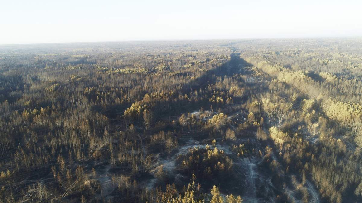 Лісові пожежі на Луганщині