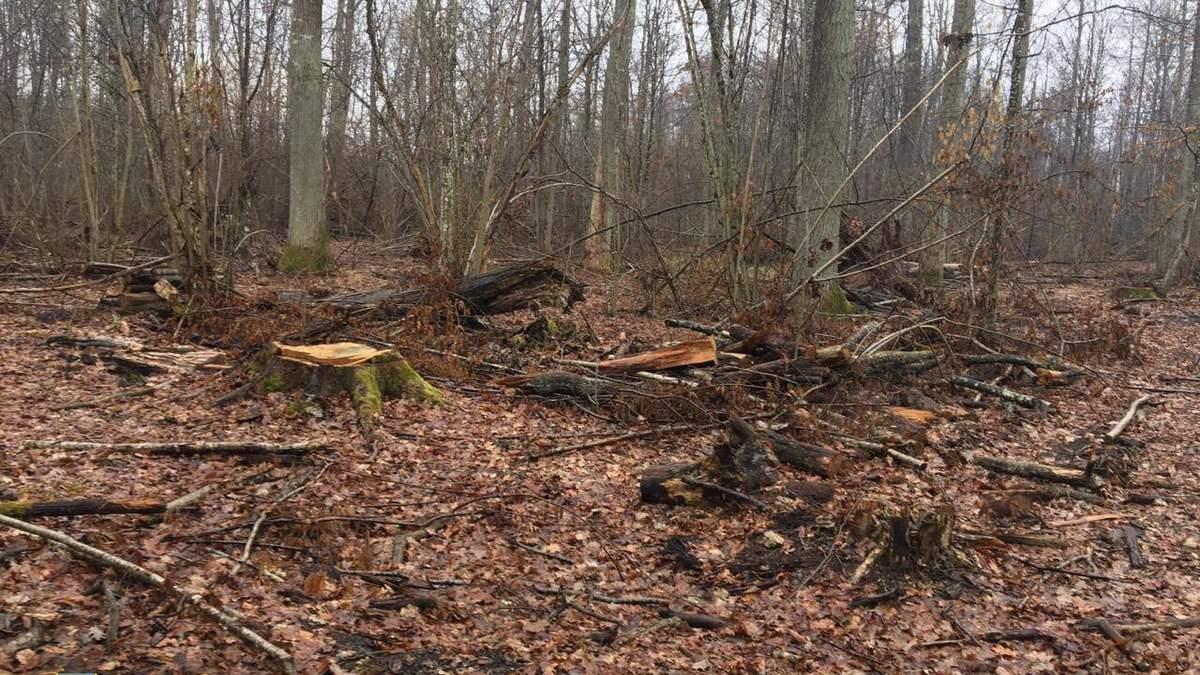 СБУ разоблачила масштабную вырубку лесов на Западе и Севере - фото